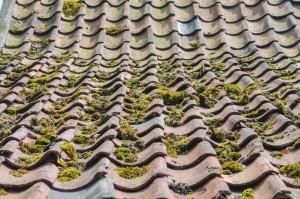 Altes Dach benötigt Dachreinigung