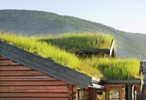 Ökoligische Dachbegrünung
